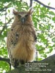 Owl BF-11 days J-N1587 copy